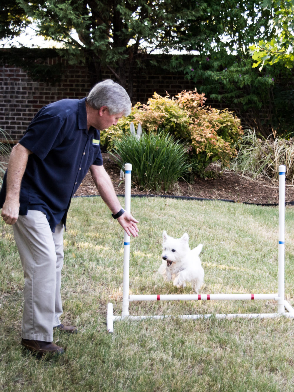 PLANO MCKINNEY DOG TRAINING